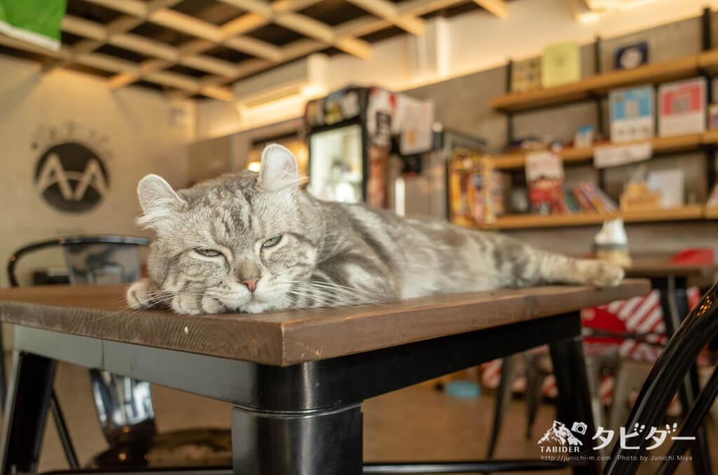 バンコクの猫カフェの猫