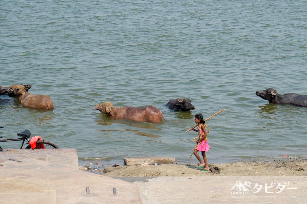 がンジス川の牛使いの女の子