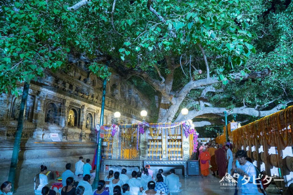 マハーボディ寺院の菩提樹