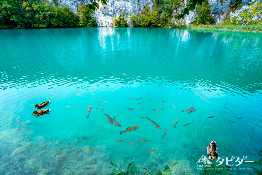 プリトヴィッツェ湖群国立公園には沢山の生物が生息している