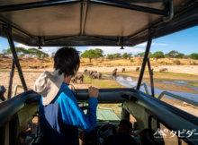 タランギレ国立公園のゾウの群れ