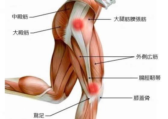 大腿筋膜張筋と腸脛靭帯